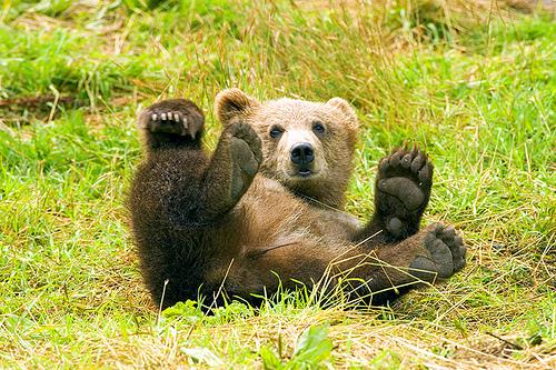 クマの画像 p1_37